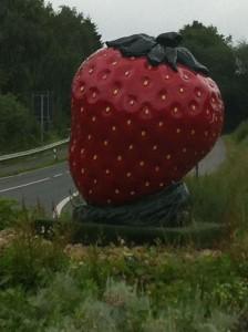 Erdbeere 3